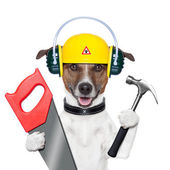 Handyman dog — Stock Photo