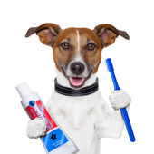 Gog czyszczenie zębów — Zdjęcie stockowe