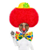 Clown dog with red wig and hat — Stok fotoğraf