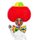 Perro payaso con peluca roja y sombrero — Foto de Stock