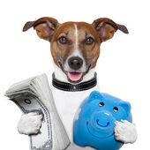 Peníze pes — Stock fotografie