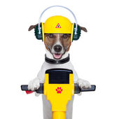 Handyman dog worker — Stock Photo