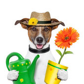 Dog gardener — Stock fotografie