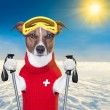 Skiing dog — Stockfoto