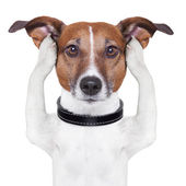 Covering ears dog — Stock Photo