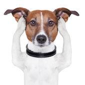 Som täcker öronen hund — Stockfoto