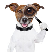 Dog with magnifying glass — Stok fotoğraf