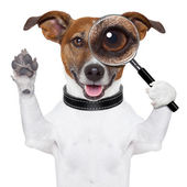 Dog with magnifying glass — Stock Photo