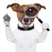 Perro con lupa — Foto de Stock