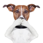 Covering mouth dog — Stock Photo