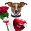 Valentine dog — Stock Photo #17838945