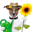 Dog gardener - Stock Photo