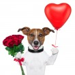 Valentine dog — Stock Photo #17838951
