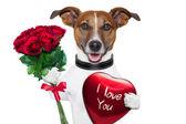 Perro de san valentín — Foto de Stock