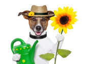 Dog gardener — Stock Photo