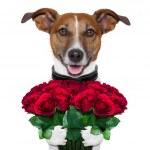 Valentine dog — Stock Photo #18103809