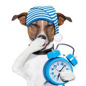 σκύλος κουρασμένος υπναράς — Φωτογραφία Αρχείου
