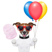 Dog balloons and cotton candy — Stock Photo