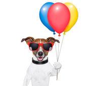 Perro globos y algodón de azúcar — Foto de Stock