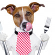 Hungry dog - Stock Photo