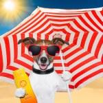 Dog summer sunscreen — Stock Photo #18850709