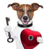 Valentine dog , unlock my heart — Stock Photo