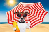 Dog summer sunscreen — Stock Photo