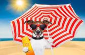 Letní sluneční pes — Stock fotografie