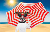 Dog summer — Foto de Stock