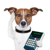 Successful dog accountant — Zdjęcie stockowe