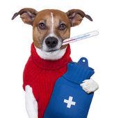 Zieke hond — Stockfoto