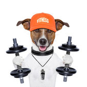 Funny fitness dog — Foto Stock