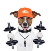 搞笑健身狗 — 图库照片