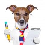 Secretary dog — Stock Photo