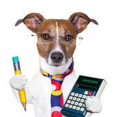 секретарь собака — Стоковое фото