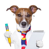 Secretary dog — Stock Photo
