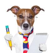 Sekreterare hund — Stockfoto