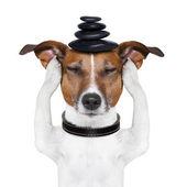 Dog meditation — Stock Photo
