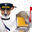 Mail dog - Foto Stock