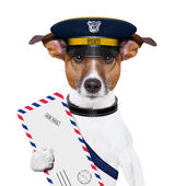 邮件的狗 — 图库照片