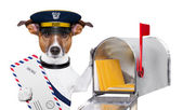 Mail dog — Fotografia Stock