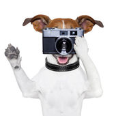 Dog photo — Foto Stock