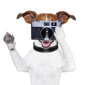 Zdjęcie psa — Zdjęcie stockowe