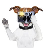 Dog photo — Stock Photo