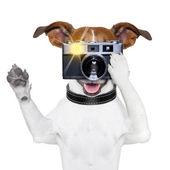 Psí fotografie — Stock fotografie