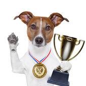 Winnaar hond — Stockfoto
