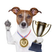 Winner dog — Stockfoto