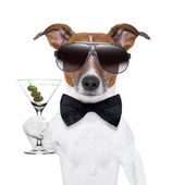Martini dog — Stock Photo