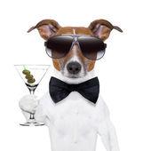 马提尼的狗 — 图库照片