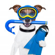 Scuba dog — Stock Photo